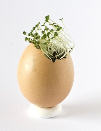 Summer savory growing in an empty egg shell Stock Photo