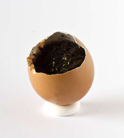 Parsley growing in an empty egg shell Stock Photo