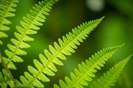 Un bel fumetto closeup di foglie di felce su uno sfondo naturale in estate Archivio Fotografico - 80121415