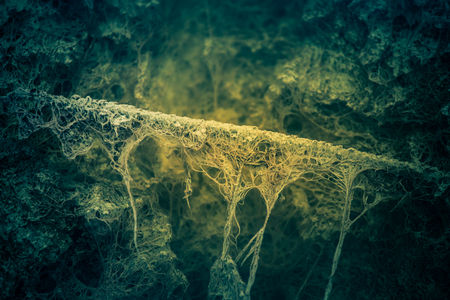 A strange looking underwater structures in a pond with sulfur sludge