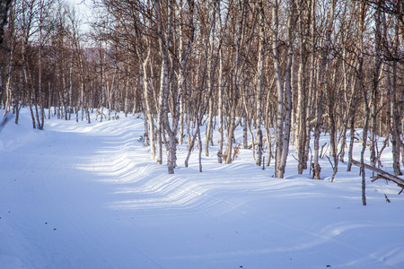 mushing: A beautiful white landscape of a snowy Norwegian winter day with tracks for snowmobile or dog sled