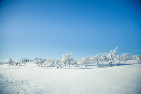 A beautiful landscape of a frozen plains in a snowy Norwegian winter day
