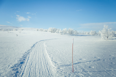 sky brunch: A beautiful white landscape of a snowy Norwegian winter day with tracks for snowmobile or dog sled