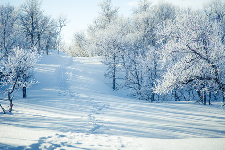 sky brunch: A beautiful white landscape of a snowy Norwegian winter day with footprints