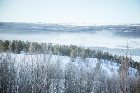 sky brunch: A beautiful forest landscape of a snowy Norwegian winter day