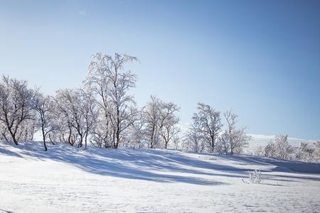 snowy field: A beautiful white landscape of a snowy Norwegian winter day Stock Photo