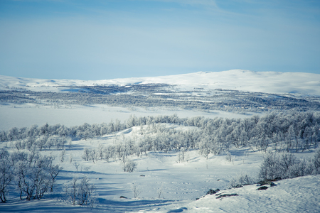 sky brunch: A beautiful white landscape of a snowy Norwegian winter day Stock Photo