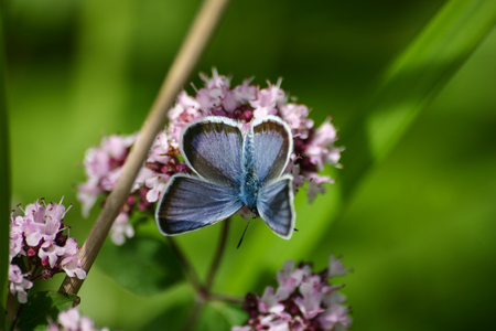 A beautiful blue butterfly on a flower Stock Photo