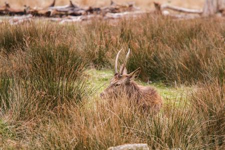 cola mujer: Deers libre de roaming en el parque al aire libre Foto de archivo