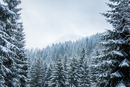 tatra: A beautiful winter forest landscape with mountains in the distance. Western Tatra mountains in Slovakia Stock Photo