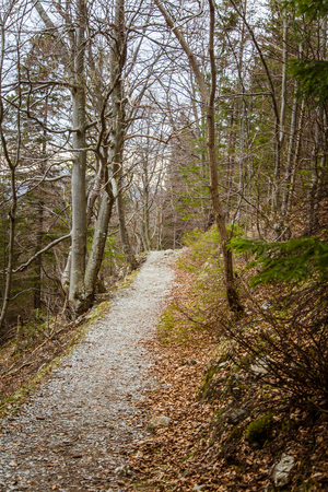 A beautiful mountain path through forest with autumn leaves. Mala Fatra mountains in Slovakia