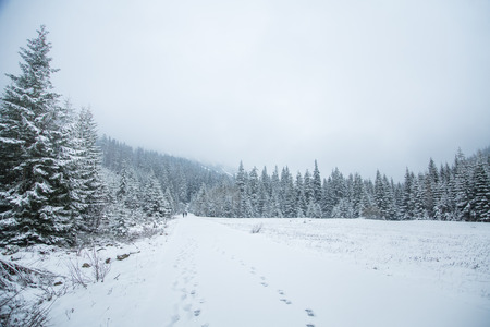 winter road: A beautiful winter mountains forest landscape with a road. Western Tatra mountains in Slovakia Stock Photo