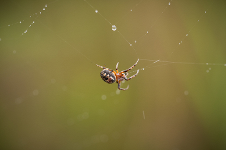 A small spider in a summer forest. Macro shallow depth of field photo. Stock Photo