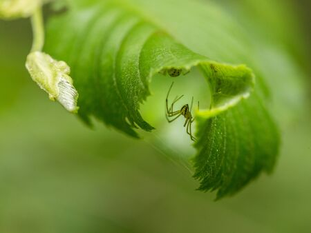 eight legs: A small spider in a summer forest. Macro shallow depth of field photo. Stock Photo