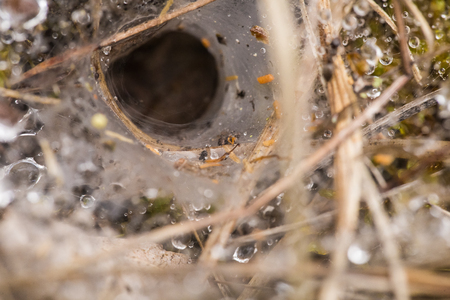 Spider net on a ground with water droplets. Summer morning in swamp. Shallow depth of field macro photo. Stock Photo