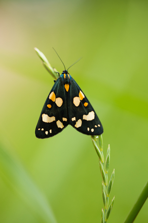 A beautiful, bright spotted butterfly sitting on a grass in summer evening. macro shot.