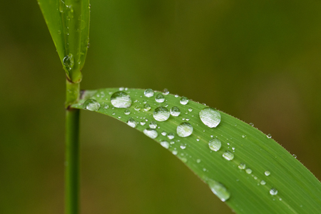 A beautiful closeup of a marsh grass after the rain. Shallow depth of field closeup macro photo.
