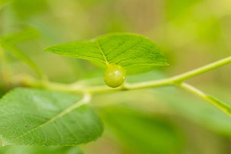 tiefe: Ein schöner, lebendiger Busch verlässt den natürlichen Hintergrund nach dem Regen im Sommer. Stehrevier Schärfentiefe Makro-Foto.