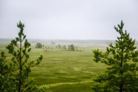 A beautiful mire landscape in Finland - dreamy, foggy look