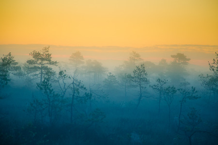 A dreamy swamp landscape before the sunrise. Colorful, misty look. Marsh scenery in dawn. Beautiful, artistic style photo.