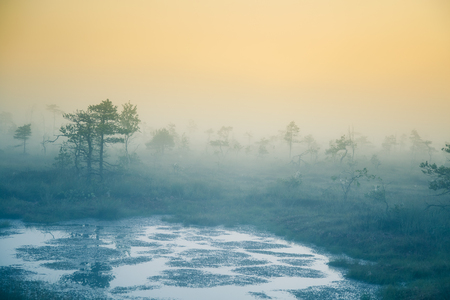 A dreamy swamp landscape before the sunrise. Colorful, misty look. Marsh scenery with a lake. Beautiful artistic style photograph.