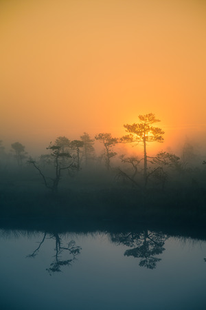 A beautiful, dreamy morning scenery of sun rising in a misty swamp. Artistic, colorful landscape photo. Stock Photo