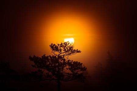 松の木の後ろに太陽が昇る美しいディスク。暗い、神秘的な朝の風景です。終末論的な外観。芸術的なカラフルな風景。