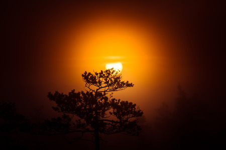 Un disco hermoso de un sol naciente detrás del árbol de pino. Oscuro, misterioso paisaje de la mañana. Mirada apocalíptica. Paisaje artístico y colorido. Foto de archivo - 83824337