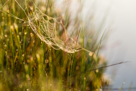 A beautiful morning sunrise landscape with a spider web. Dreamy look.
