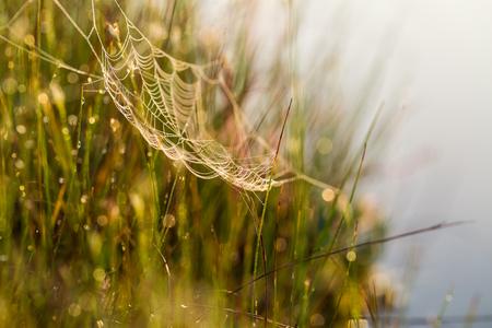 Een mooi landschap van de ochtendzonsopgang met een spinneweb. Dromerige blik.