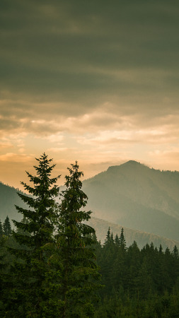 An inspiring mountain landscape in Tatry, Slovakia. Vivid, gradient scenery with perspective in warm green tone. Summer in mountains. Nature wallpaper in bright colors. A beautiful vertical wallpaper for a smartphone. Vertical image for a mobile use.