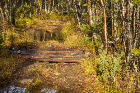 A beautiful hiking path through an autumn forest in Norway. Fall scenery in forest. Beautiful autumn landscape.