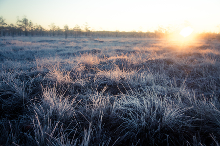 northern light: Beautiful morning landscape with a rising sun. Colorful scenery of a frozen wetlands in autumn. First frost in nature. Bright sun shine with flares. Stock Photo