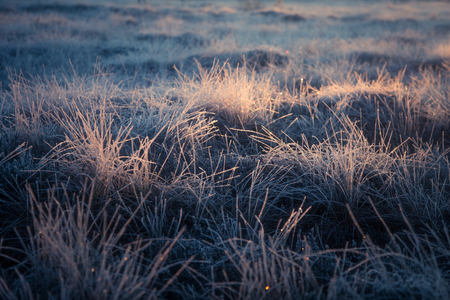 A beautiful frozen wetland grass in the morning light. Field of frozen sedge grass in swamp. Bright warm light on cold ground.