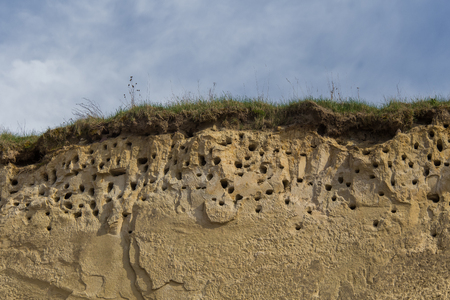 A colony of bird holes in a snadstone cliff at the beach near Baltic sea. Bird nesting place.