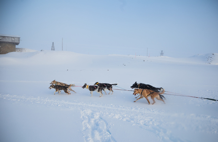 A beautiful six dog team pulling a sled in beautiful Norway morning scenery. Winter sports for dog lovers. Sunny, foggy morning.