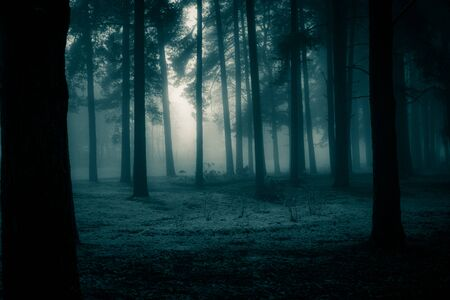 A spooky scenery of a trees. Halloween themed landscape. Foggy morning during the first snow. Stock Photo