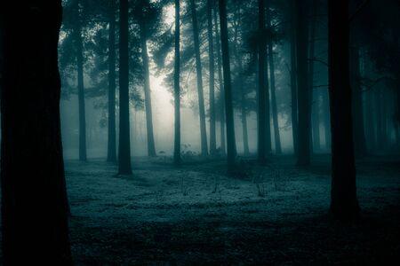 Eine gespenstische Landschaft von Bäumen. Halloween Themenlandschaft. Nebeliger Morgen während des ersten Schnees. Standard-Bild