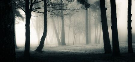 A spooky scenery of a trees. Halloween themed landscape. Foggy morning during the first snow. Фото со стока