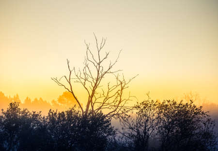 A beautiful diffused light during the spring sunrise. Trees in spring with warm sun light in morning. Rural springtime scenery of Northern Europe.