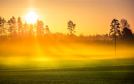 A beautiful misty morning in the spring. Sun shining throught the mist. Soft, warm, diffused light over the springtime landscape. Rural scenery of Northern Europe.