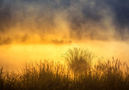 A beautiful spring sunrise mist over the flooded wetlands. Warm spring scenery of swamp with grass and fog. Beautiful landscape of Northern Europe in springtime. Banco de Imagens