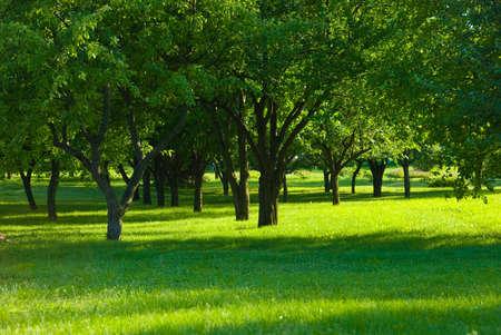 Green Gras im Obstgarten Standard-Bild