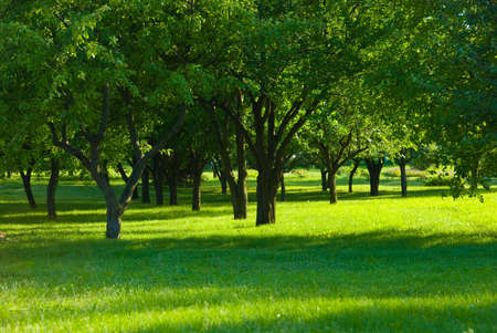 Green grass in fruit orchard