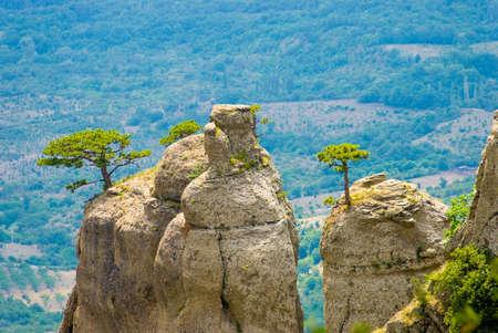 stratification: Trees on rocks. Landmark - Ghost Valley, Demerdji, Crimea, Ukraine. Stock Photo