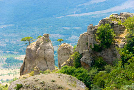 conglomeration: Trees on rocks. Landmark - Ghost Valley, Demerdji, Crimea, Ukraine. Stock Photo