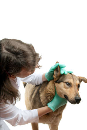 Young vet inspects a dog in a clinic photo
