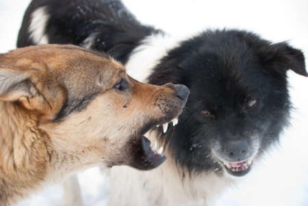 Two dogs grin against each other