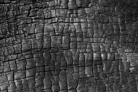 cinders: Burnt wood high resolution texture