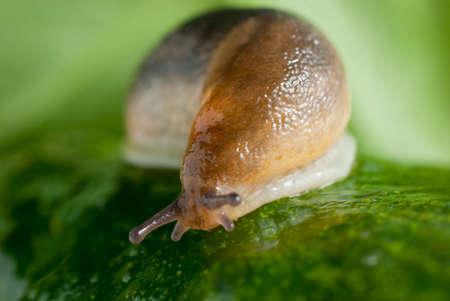 Slug creeps on a cucumber surface macro image.